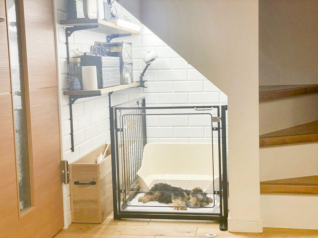エクステイルゲートと小型犬